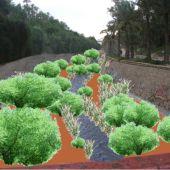 Margalló-Ecologistas en Acció plantea eliminar la solera de hormigón de la ladera del Vinalopó en Elche.