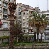 O Concello cortará as palmeiras enfermas nas Burgas