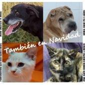 Cartel campaña tenencia responsable de mascotas