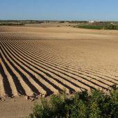 ANSE pide correspondencia inequívoca entre Unidades de Demanda Agraria y Derechos de Agua Inscritos que se imposibilite la futura regularización de nuevos regadíos en la cuenca