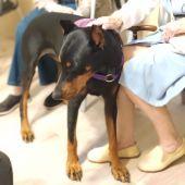 Un perro de psicoanimal en el Centro de Día Sanitas Clara del Rey
