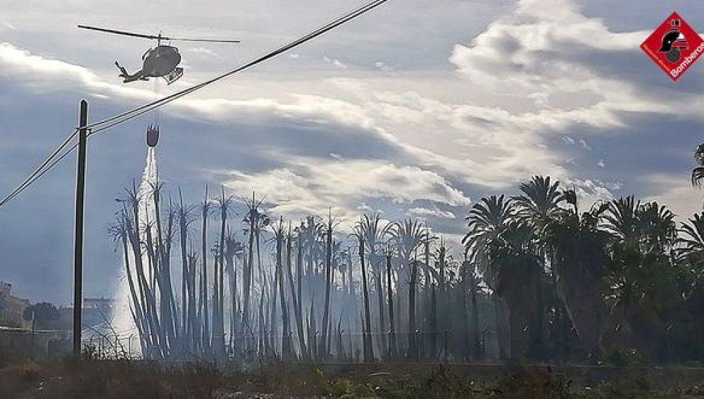 Incendios en una vivienda de Catral y en un vivero de palmeras de Albatera