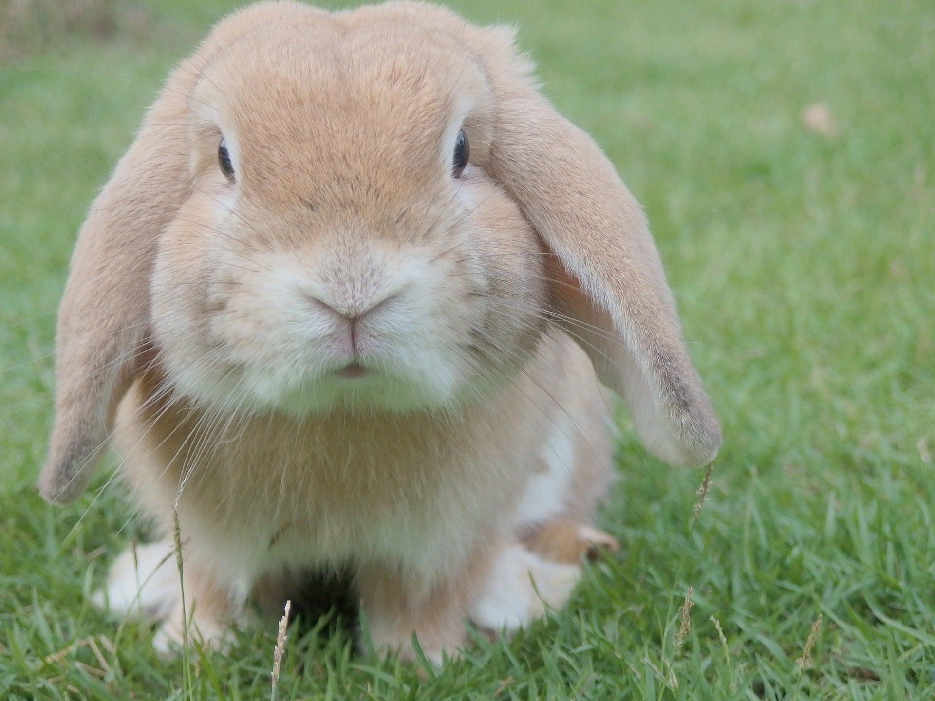 Señales del Fin del Mundo: Conejos que caminan con dos patas