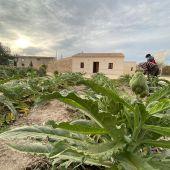 Acto simbólico con las diferentes variedades plantadas en la parcela del futuro Ecomuseo de Almoradí