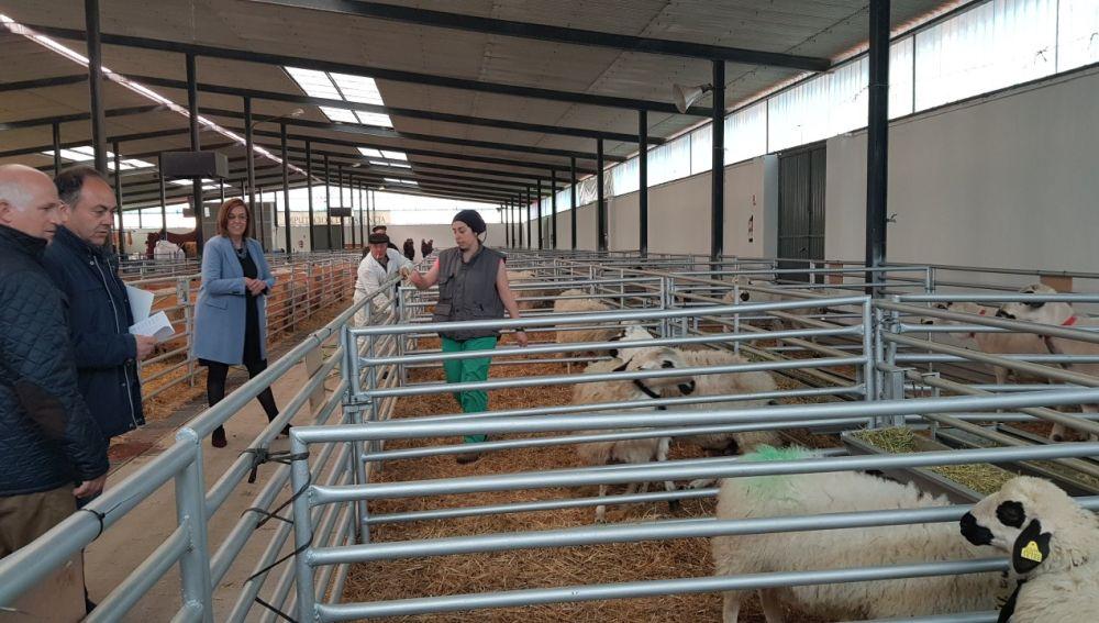 La Diputación renueva su compromiso con los ganaderos de ovino de raza churra a través de su colaboración con ANCHE