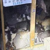 Gatos rescatados en una protectora en Arganda