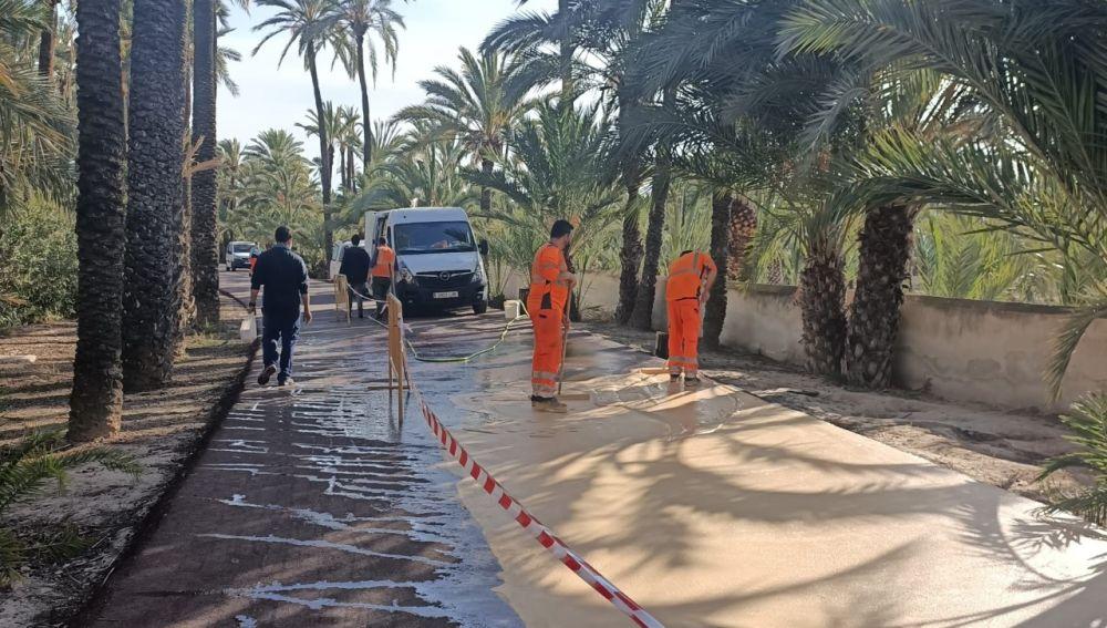 Trabajos de pintado del pavimento en el Camí de l'Almàssera de Elche.