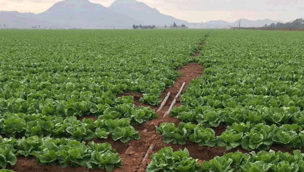 La agricultura intensiva del Campo de Cartagena solo supone solo el 0,6% del PIB regional