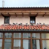 El Ayuntamiento de Aguilar realiza un control de palomas