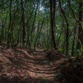 El bosque gallego