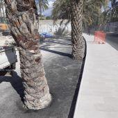 Alcorque con palmeras cubiertos con cemento en Elche.