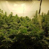 Madre e hijo detenidos por tener una plantación de marihuana en su sótano de Mijas