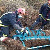 Rescate en helicóptero de Olivia, una burra que quedó atrapada en unas zarzas