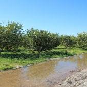 Se han acumulado entre 50 y 60 litros por metro cuadrado dependiendo de los municipios, son oro para el campo tras más de 50 días sin caer una sola gota de agua