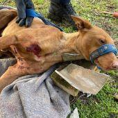 La perra fue liberada por la Policía Local de Ciudad Real