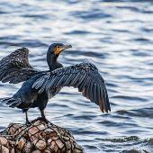 Protección aves marinas