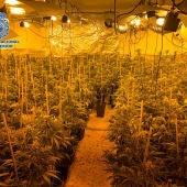 Plantación de marihuana desmantelada por la Policía Nacional (Archivo)