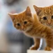Cómo actuar si nos encontramos una camada de gatitos en la calle