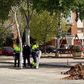 Trasplantados en el Bosque de la Vida los árboles del entorno de la plaza de toros