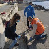 Aparición de delfines mutilados en las playas de Ceuta.