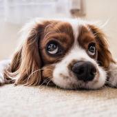 Ángel Osuna, psicólogo y adiestrador canino, nos ofrece los mejores consejos en nuestro espacio semanal de los martes