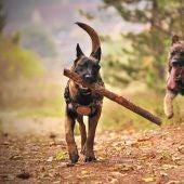 Hay veces que los paseos no son lo suficiente liberadores de 'estrés' para los perros