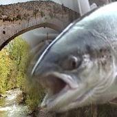 Premio de 2.500 euros al pescador que capture el Campanu