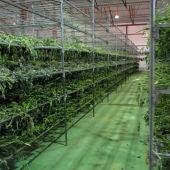 Marihuana localizada en naves de Villel