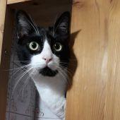 El Ayuntamiento destina 10.000 euros al control de las colonias de gatos