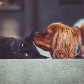 El Congreso aprueba una proposición de ley para los animales dejen de ser considerados como 'cosas'