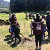 Diputación de Cáceres y Más Medio fomentarán la recuperación y la repoblación del olmo común en la provincia