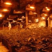 La Policía Nacional interviene casi 3.500 plantas de marihuana