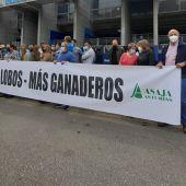 Protesta de ganaderos contra la política de Sánchez de protección del lobo