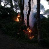 Incendio de una masa arbórea de Puerto Real