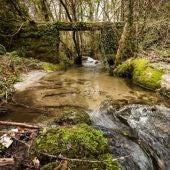 O Concello organiza visitas ao bosque de Ridimoas entre alumnado de ESO e Bacharelato