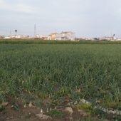 El banco de tierras de València languidece a los tres años de su creación