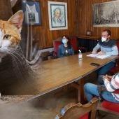 Piloña controlará las colonias felinas