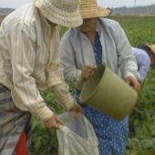 Imagen de agricultores en el campo
