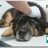 Accelerate Innovation by Fujifilm (01x05) - Cómo ha afectado la Covid a mascotas y centros veterinarios