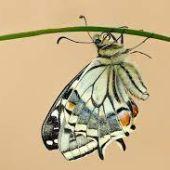 El micromundo de las plantas e insectos se agranda gracias al objetivo fotográfico de Antonio Muñoz Salto