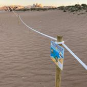 La playa de La Mata, con el parque del agua y sus banderas azules debe disponer de programas activos de conservación de la biodiversidad