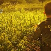 La Guardia Civil desmantela cuatro cultivos de marihuana en la provincia de Toledo