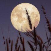 Superluna de las Flores