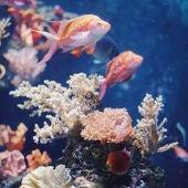 Hay que concientizar a la gente acerca de las graves amenazas que se ciernen sobre las barreras de coral del mundo entero