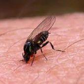 La mosca negra está atacando en areneros de parques donde juegan los niños