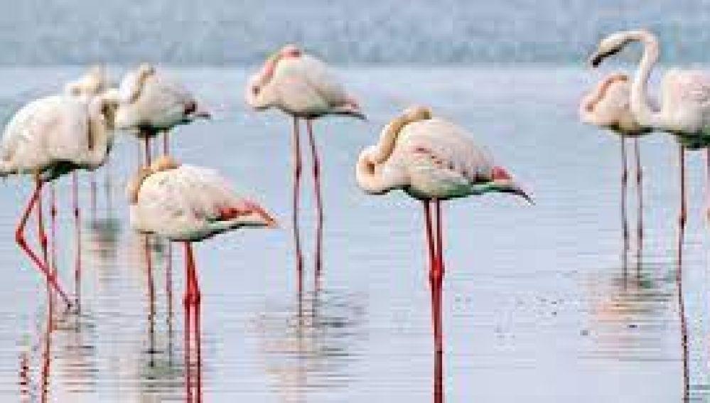 Disfruta del baile del os flamencos en las Lagunas de Pétrola