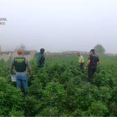 Una de las plantaciones de marihuana descubiertas