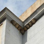Una comunidad de vecinos de Cáceres se enfrenta a una pena de cárcel por destruir una colonia de aves