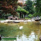 Cisne de la plaza de Gipuzkoa