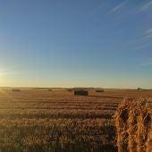 Imagen campo cereal tras cosecha